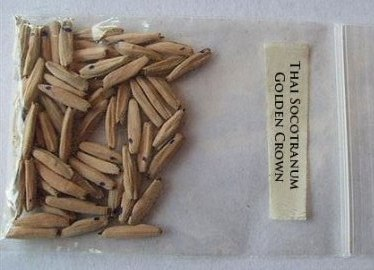 Семена адениума
