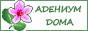 Адениум дома. Интернет-магазин семян.