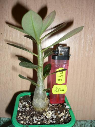 Агротехника выращивания донника 80