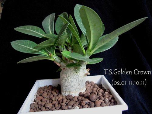 Фото гардения жасминовидная выращивания из семян