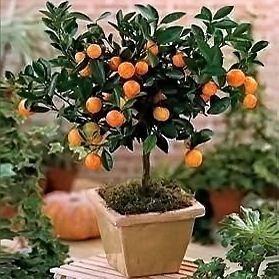 Re выращивание комнатных растений из